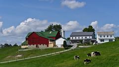 Amish Farm (ramseybuckeye) Tags: amish farm cows holstein charm ohio holmes county barn house rolling hills sky clouds pasture