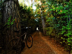 A lovely garden path (panoskaralis) Tags: bikes idealbikes cycling cycle path footpath trees green tunnel nature urban lesvos lesvosisland mytilene greece greek hellas hellenic outdoor landscape nikonb700 nikon nikoncoolpixb700
