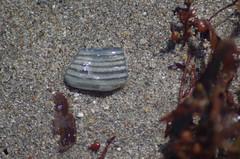 Striped Beach Stone (erluko) Tags: daniabeach tamronaf70300mmf456ldmacro12 stone seaweed sand stripes