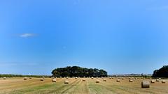 Bales (42jph) Tags: nikon d7200 uk england holywell northumberland landscape field sky hay crop bales