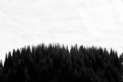 IMG_6526 (Mark Holton.) Tags: switzerland mountains cow clouds cloudy blackandwhite bw trees schweiz landscape sky