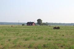 Countryside landscape. (Belinda Novika) Tags: yellow photography vormsi travel countryside house field green landscape estonia