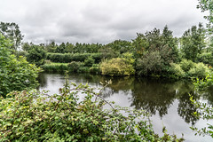 BISHOPSMEADOWS WALK SECTION OF THE NORE LINEAR PARK [LENGTH OF WALK ABOUT SIX FIELDS]-143196 (infomatique) Tags: bishopsmeadows kilkenny naturewalk naturetrail sixfields streetsofkilkenny streetsofireland infomatique fotonique august 2018 holiday sony a7riii
