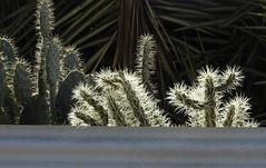 Cactus Country, Strathmerton 1414 (Lesley A Butler) Tags: victoria strathmerton cactuscountry cacti australia
