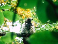 There you are (bolex.ua) Tags: tree crow leaves green autumn nature meditation september kyiv kiev ukraine