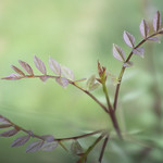 Trío de hojas thumbnail