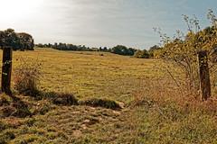 Les vallons du Scheutbos (Jean-Marie Lison) Tags: eos80d sigmaart bruxelles molenbeek scheutbos prairie clôture