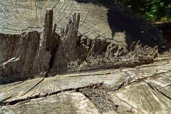DSCF2313 (AliaGrafica) Tags: trees alberi albero naura nature countrside campagna macro wood woods