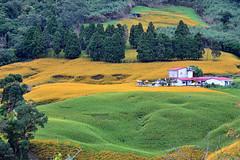赤柯山~金針花海風情畫~ Orange Daylily (Shang-fu Dai) Tags: 台灣 taiwan 花蓮 花東縱谷 nikon d800e afs24120mmf4 landscape formosa 赤柯山 orangedaylily 金針花 風景 天空