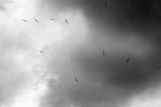 Flock of Gliders