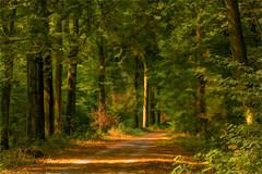 Spätsommer (flechris) Tags: landschaft landscape krajobraz campagna wald forest las sommer summer lato estate