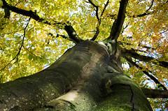 Demi sec (Atreides59) Tags: belgique tournai belgium nature yellow jaune green vert ciel sky arbre tree pentax k30 k 30 pentaxart atreides atreides59 cedriclafrance