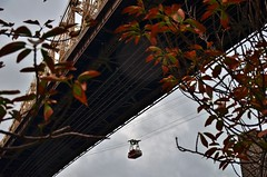 Roosevelt Island, 10.22.16 (gigi_nyc) Tags: rooseveltisland newyorkcity nyc nycskyline newyorkskyline cityskyline autumn fallfoliage queensborobridge