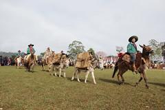 Chama Crioula 2018 (Umpardefotos) Tags: chama crioula ctg tradicionalismo gaúcho tradição cavalo cavalgada iraí rs lages sc