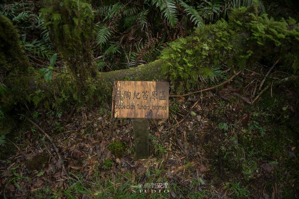 太平山翠峰湖環山步道 |走在泥濘的道路上,只為途中美景 | 宜蘭大同鄉59