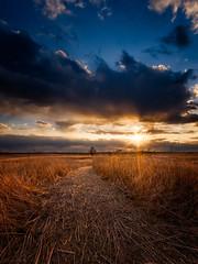 Spring Prairie (patkelley3) Tags: sunset prairie spring wheat clouds