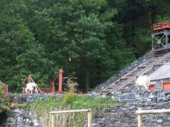 Gilfach Ddu Station - Llanberis Lake Railway - goats near the Slate Quarry Funicular (ell brown) Tags: gilfachddu llanberislakerailway rheilfforddllynpadarn padarncountrypark llanberis gwynedd wales unitedkingdom greatbritain caernarfon narrowgaugeheritagerailway llynpadarn snowdonianationalpark tree trees gilfachddustation funicular goat goats slatequarryfunicular mountain vivianincline vivianquarryrailwayincline dinorwigslatequarry v2