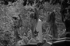 Angels - Doctor Who? (landeicgn) Tags: friedhof cemetary cementerio black white blanco negro sw schwarz weis engel angels angeles horror