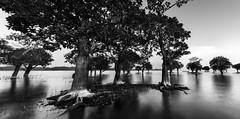 nature's creation (mailmesanu20111) Tags: assam sonbeel wetland naturalbeauty naturaldrama monochrome blackandwhitephotography longexposurephotography slowshutter landscape