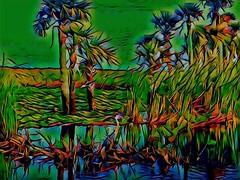 Sunset Upon the Wetlands! (jlynfriend) Tags: phonephoto lg tree bird blueheron water wetlands marsh park trees brush cabbagepalm grassland lilies flowers color art illustration artdesign texture evening