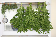 Herb Harvest (eyriel) Tags: basil thyme rosemary nature green flavoring hang hanging