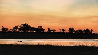 Hippo Heaven @ Sunset