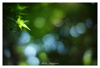 2018/8/25 - 1/27 photo by shin ikegami. - SONY ILCE‑7M2 / 七工匠  7artisans 50mm f1.1