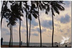 Negombo - Sri Lanka (UfoSp@in ஐ★Freelance Photo★ஐ) Tags: negombo srilanka india ශ්රීලංකාප්රජාතාන්ත්රිකසමාජවාදීජනරජය lankadvīpa ceilán lalágrimadelaindia bandaranaike நீர்கொழும்பு tamil gampaha occidental canon canoneosm50 view vacancy velocity art apple af sky sol zoom colores colors viento beatiful bokeh belleza beach night neon nubes clouds best myself mac macbookpro macbook love live light lightroom lugares landscape lens landscapes l photo photography photoshop photomatrix instagram iso infinity ufospin usm years texturas travel textures topaz treasure traveling exposure explore water walk walking 2018