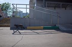 . (_ИГ) Tags: ds2 cats shadows plusa plusc