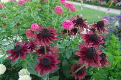 JLF19848 (jlfaurie) Tags: jardin hôteldeville evéché bourges jlfr mechas mpmdf lucila 21082018 flores garden flowers