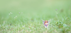 Fairy. A magical winged fairy sitting in the garden with soft focus and shallow depth of field. For banner. Bed time story and fairytales concept. (enchanted.fairy) Tags: armor background banner beautiful beauty book child childhood christmas door dream dress dust fairies fairy fairytale fantasy female forest garden girl green house imagination kid landscape light little magic magical mysterious mystery mystical nature outdoor person portrait pretty red small story tale tree white wing wings woman wood woods young