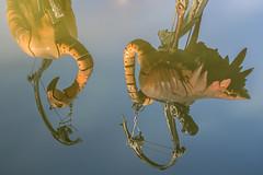 La tête à l'envers (B.Guilbaud) Tags: soleil zoomécanique eau placenapoléon larochesuryon vendée paysdeloire reflet animaux animal flamantsroses centreville animations nikonphotographie couleurs balade ville animauxmécaniques regards