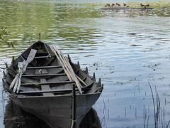 Storholmen (davidmcnuh) Tags: sweden boat lake water oar birds viking museum openair openairmuseum erken village vikingvillage