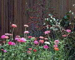 DSCN0202b (forfiv) Tags: digital color nikonb700 wa grandcoulee flowers