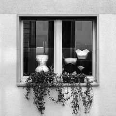 Ménage-à-trois (Blende1.8) Tags: corsage corsages korsage korsagen wuppetal elberfeld luisenviertel window fenster auslage auslagen schaufenster shopwindow displaywindow clothes bekleidung mono monochrome monochrom schwarzweis black white facade fassade square quadrat iphone iphone8plus 8plus mobileshot nrw hipstamatic