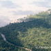 The rainforest below