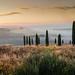 Homeland of Michelangelo