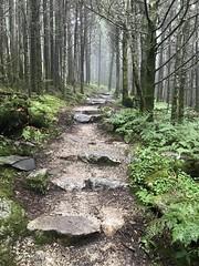 Black Mountain Crest Trail (esywlkr) Tags: mtmitchellstatepark nc northcarolina trail hike nature path mountains forest