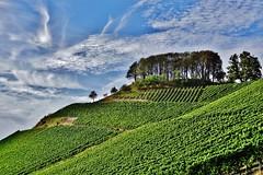 Der Casteller Schlossberg - The castle hill of Castell (cammino5) Tags: castell schlossberg gerichtslinde september 2018 weinwanderung franken bayern deutschland steigerwald