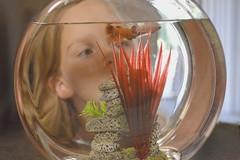I wish... (jeffr71) Tags: fish daughter bowl pet wonder dream