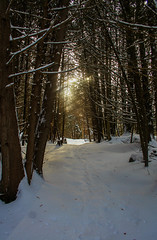 Magical Sun (ETt_) Tags: winter sun sunset forest pins pinstrees light trees snow landscape dark magic