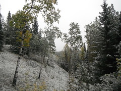 Freshly Fallen K Country (Mr. Happy Face - Peace :)) Tags: snow art2018 hiking alberta canada kcountry fall autumn weather scenery trails september naturelovers forest woodlands trees bearcountry