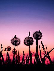 """I climbed the tree to see the world (""""What's in the box?!"""") Tags: surreal manipulation sunset flowers nature silhouette photoshop portrait"""