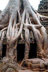 Ta Prohm Temple (TheViewDeck) Tags: trees cambodia taprohm prohm siemreap angkor