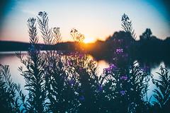#284 - Sunset by the water / Západ u vody (photo.by.DK) Tags: meopta meoptaadmiralens meoptaopenar40 meoptaopenar4018 meoptaopenar40mm meoptaopenar40mmf18 40mm 40mmprime sony sonyalpha sonya5100 oldlens cmount cmountlens legacylens manuallens manualfocus manual manualondigital wideopen wideopenbokeh shotwideopen bokeh bokehlicious bokehful artbydk photobydk depthoffield