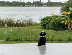 Sam checking out the lake