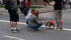 Making off do retrato (JODF) Tags: pov flickrfriday pontodevista dog cachorro cão