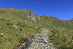 montée au lac du Grand Désert (bulbocode909) Tags: valais suisse nendaz montagnes nature chemins paysages vert bleu fleurs