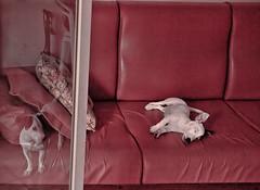 Puppy's dream (Stediv) Tags: dogs puppy dream