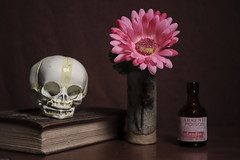 Still Life (N.the.Kudzu) Tags: tabletop stilllife skull book pottery vase flower poison canondslr lensbabyburnside35 lightroom